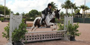 Showing at the Winter Equestrian Festival