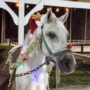 Enchanted Horse Parade