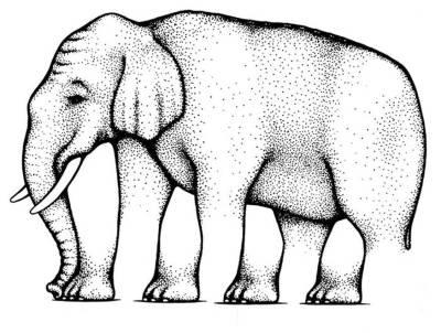 illusion-elephant-legs
