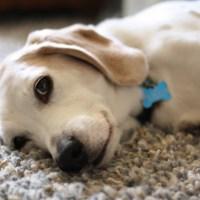 Adopt, Don't Shop: Give Back Blog Hop