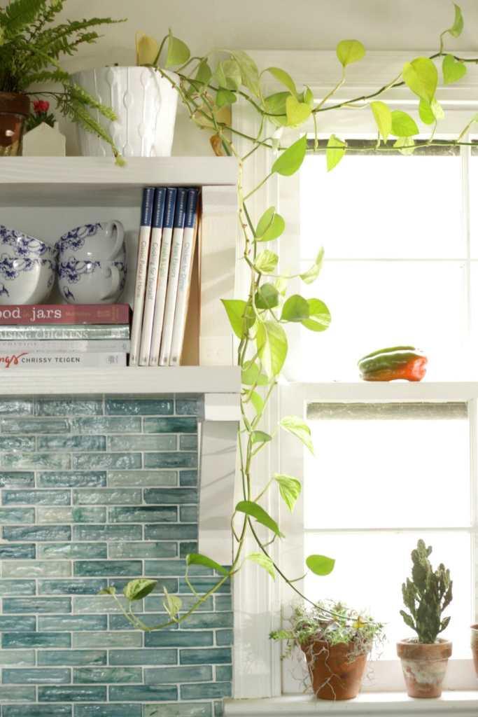 plants-in-aqua-kitchen