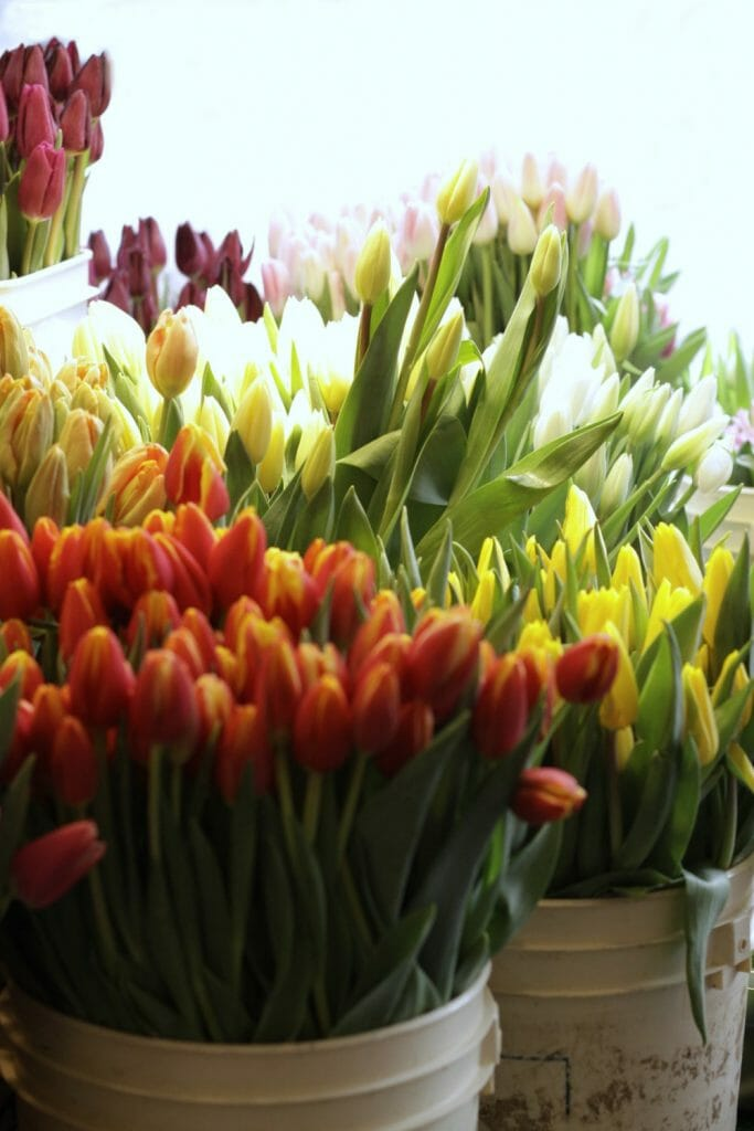 Pike Place Tulips