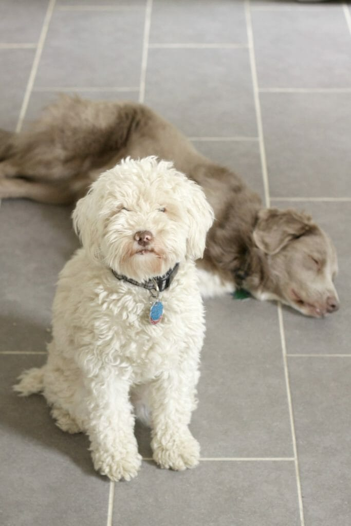 Cleaning Grout with Dogs