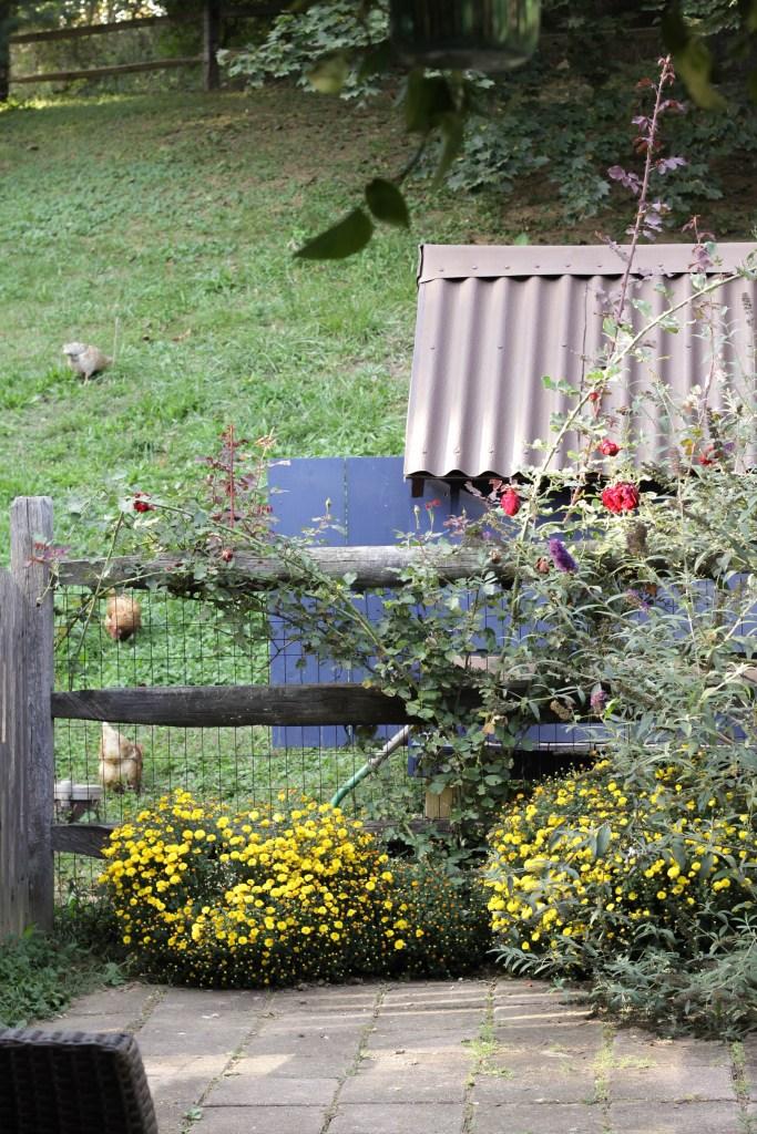 DIY Chicken Coop at Fall