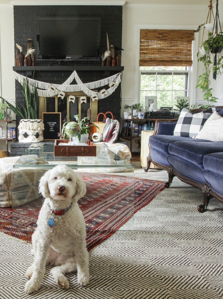 Eclectic Vintage Living Room with Cute Puppy