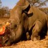 Wildlife Poaching   Brian Castellani