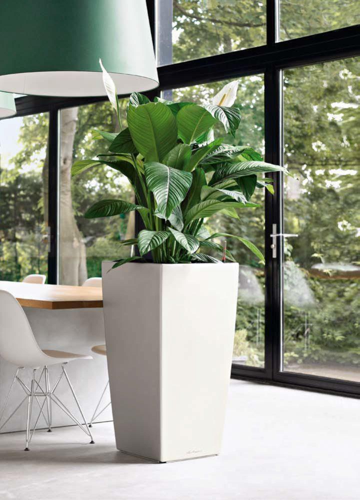 plantas naturales en la oficina