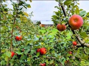 Apple Season in Wisconsin at Castle La Crosse