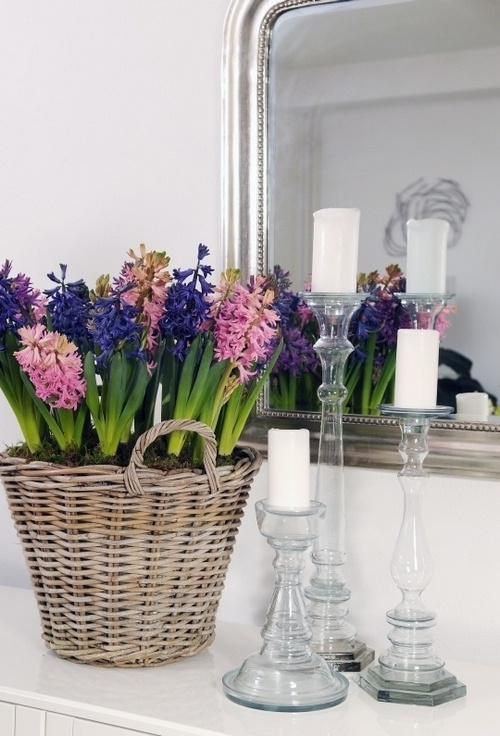 A-Spring-Time-Favourite-The-Hyacinth_01