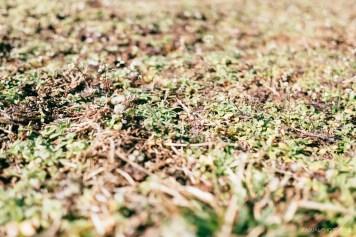 fujifilm X70 Camera Review Samples-49
