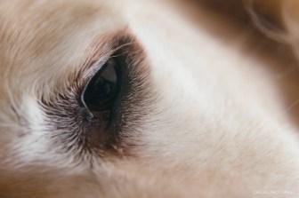 macro lens filters close up-7