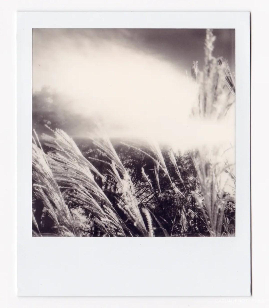 Polaroid Originals films-3
