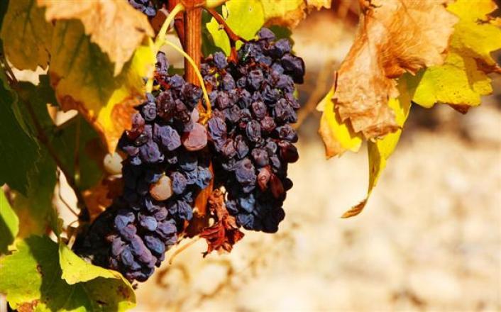 Vinificación del vino dulce en el marco de Jerez. - CataDelVino.com