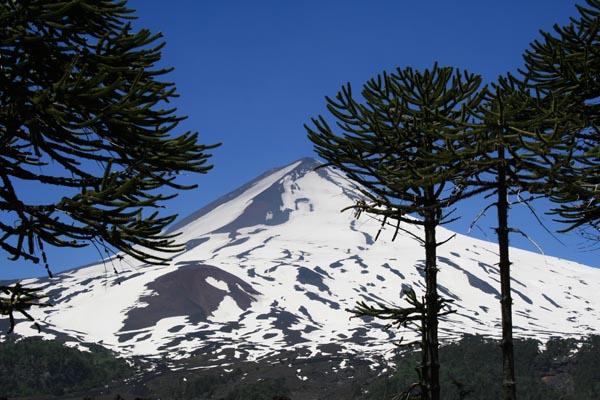 La Araucaria – Monumento Nacional de Chile
