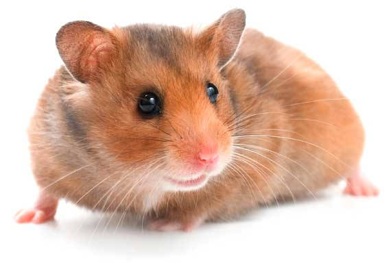 Venta de alimentos y accesorios para roedores.