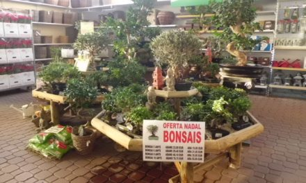 Oferta Especial en Bonsais para Navidad