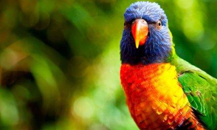 ¿Cómo y porqué alimentar adecuadamente a un pájaro?