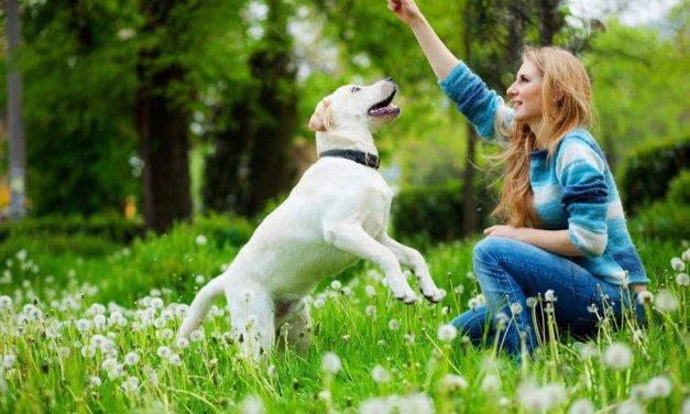 Cómo evitar que tu perro se aburra