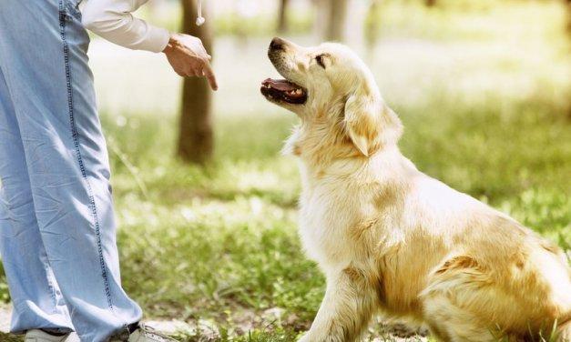 Cómo convivir plantas y mascotas en el hogar