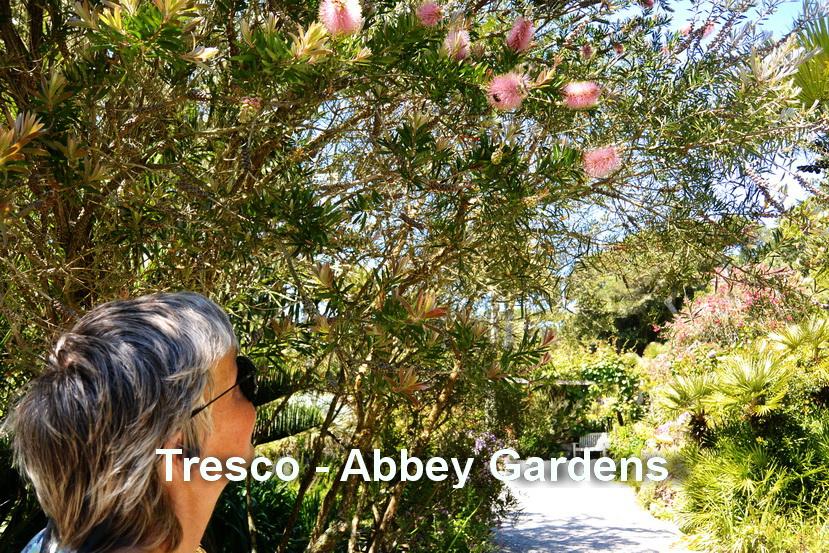 Tresco - Abbey gardens2