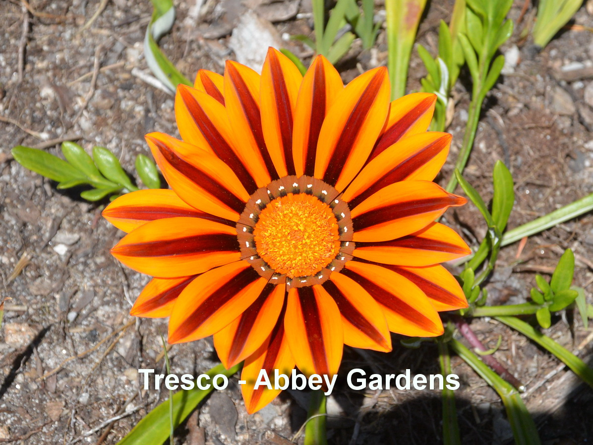 Tresco - Abbey gardens5