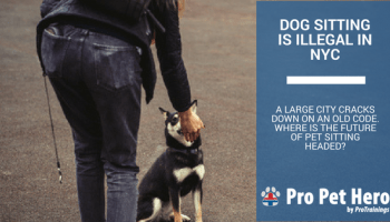 Is Neosporin Safe for My Dog and Cat? | Pro Pet Hero Blog