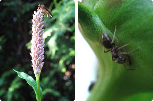 insekter.jpg