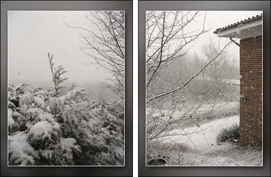 sne.jpg