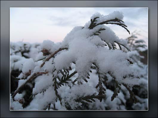 sne1.jpg