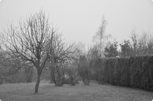 Dis og tåge