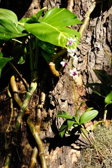 Smukke orkider