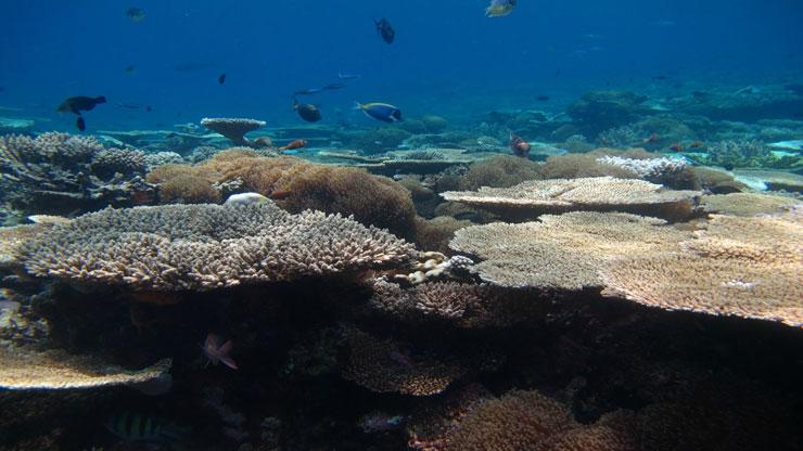 Maldiverne2