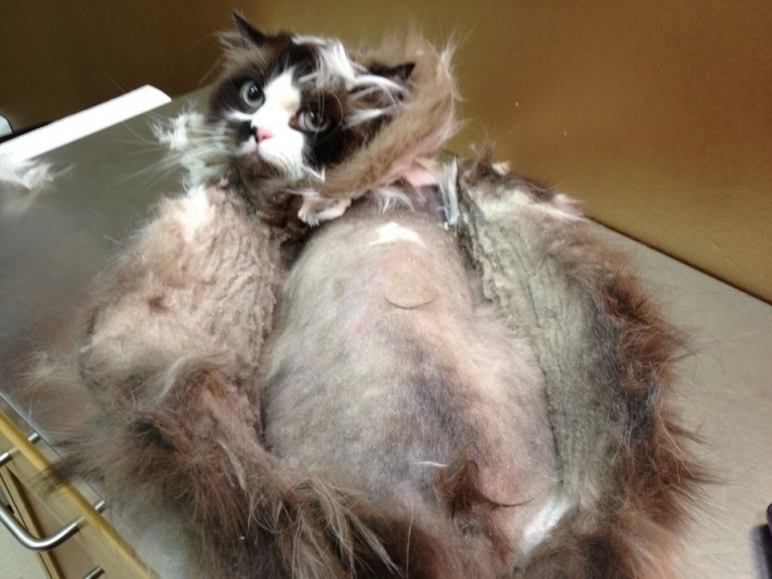 Seeing Matting And Pelts From A Cats Perspective
