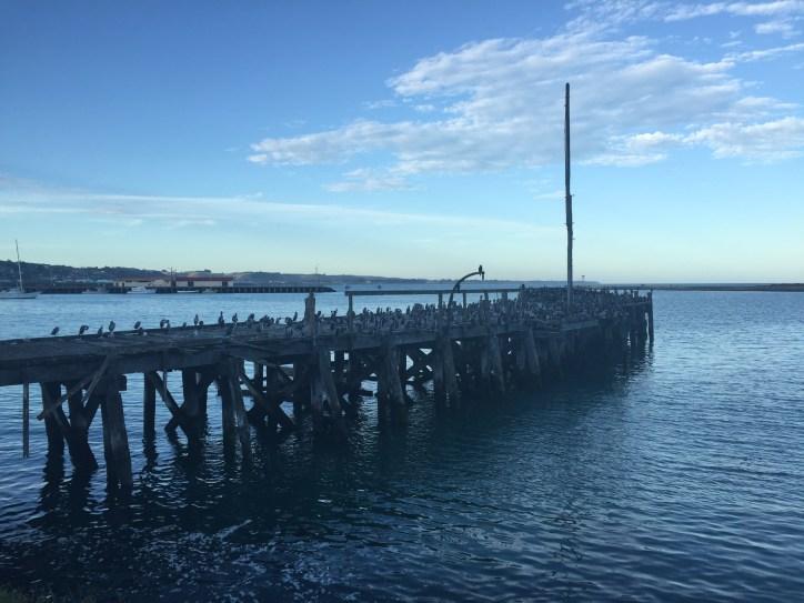 Birds on a pier, Oamaru