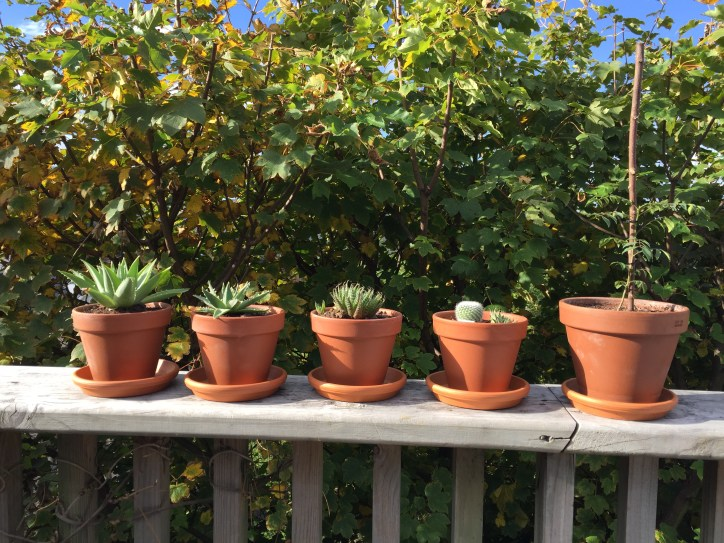 Plants in the sunshine