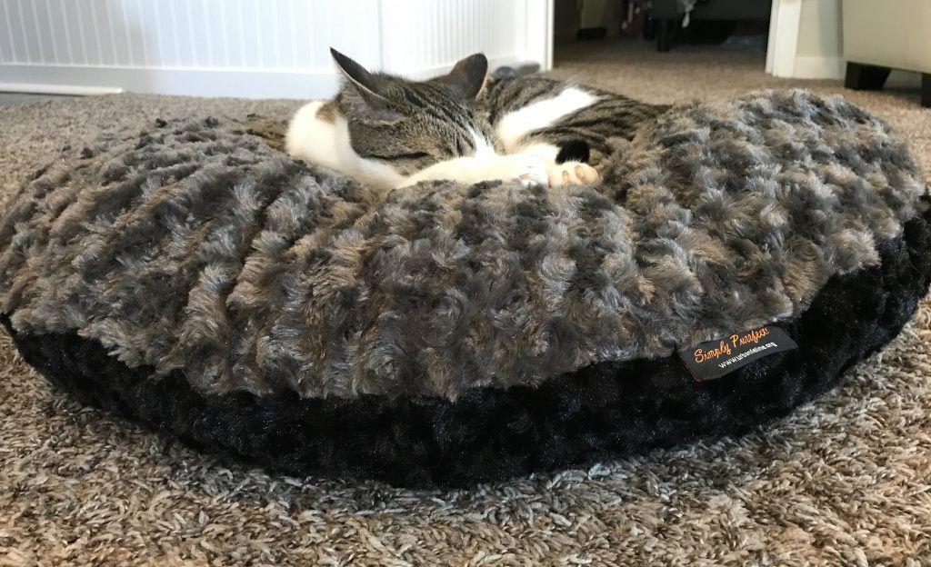 Pixel on cat bed