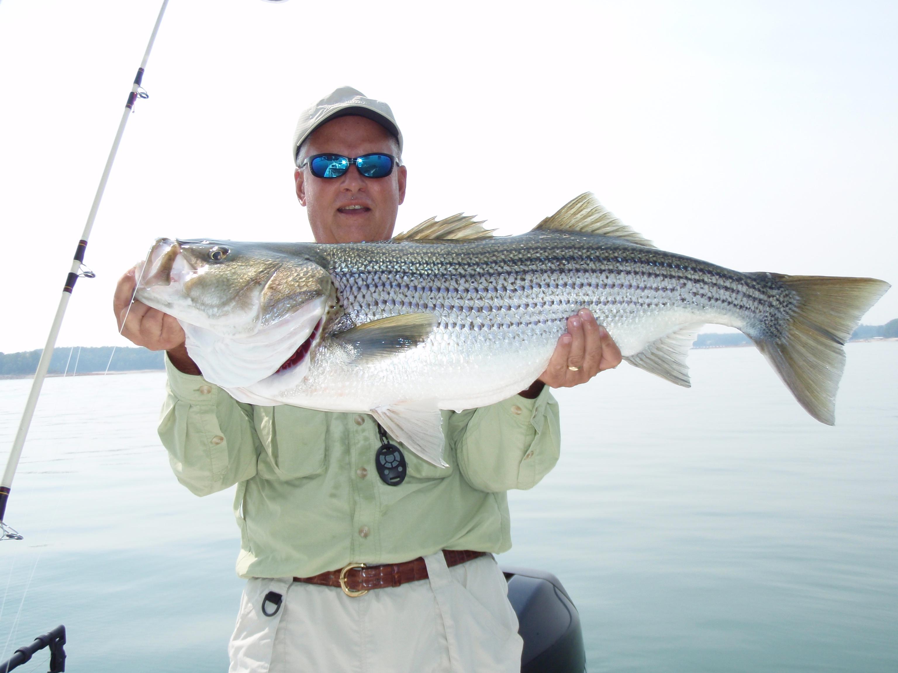 Lake lanier fishing guides for Lake lanier fishing guide