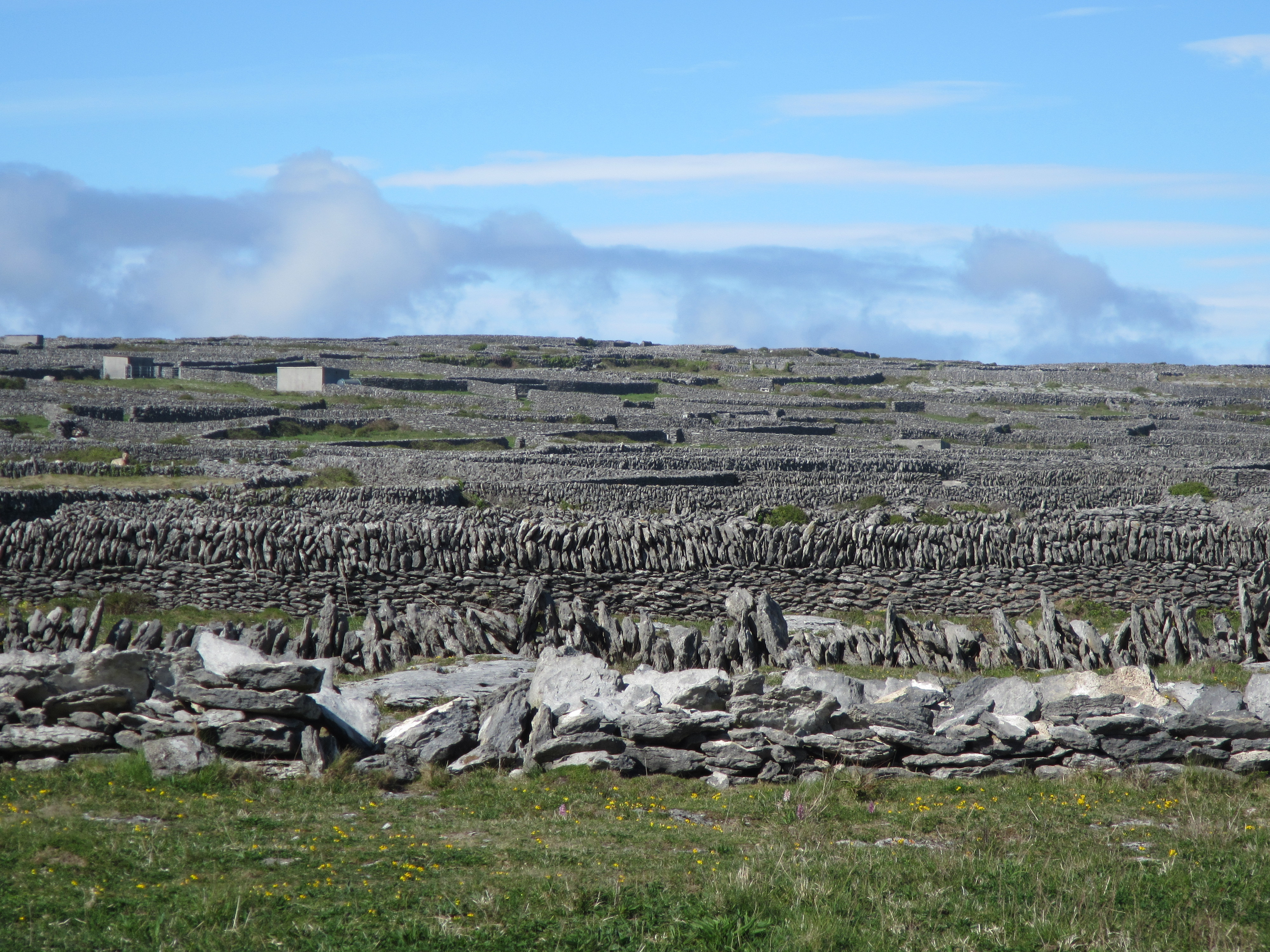 Farms on islands are made up of a number of small fields surrounded by stone walls which give shelter to livestock and protect the soil.