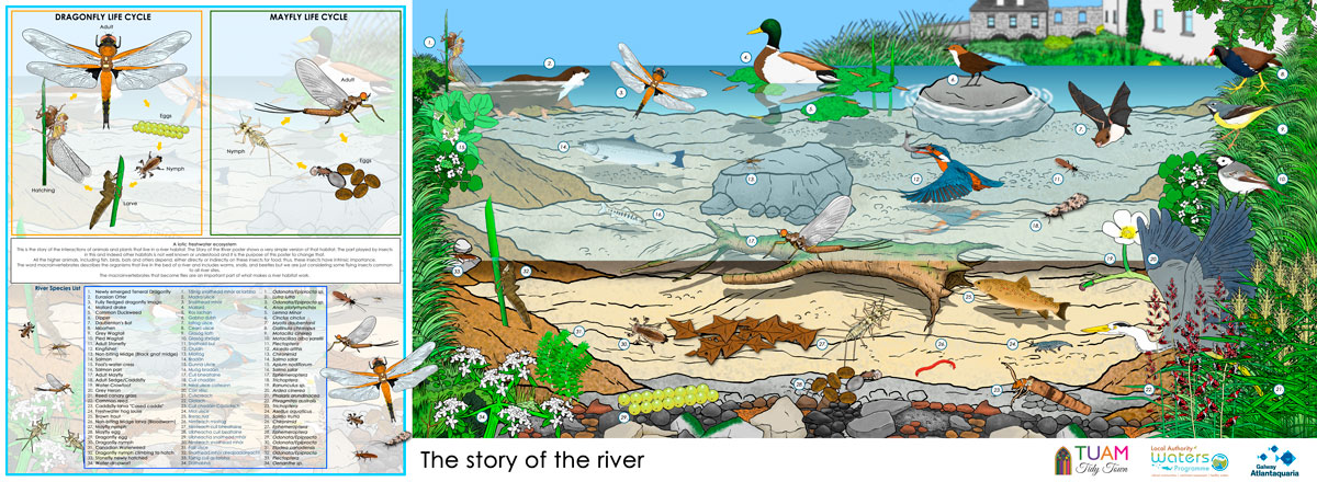 Tuam Tidy Towns - The Story of the River