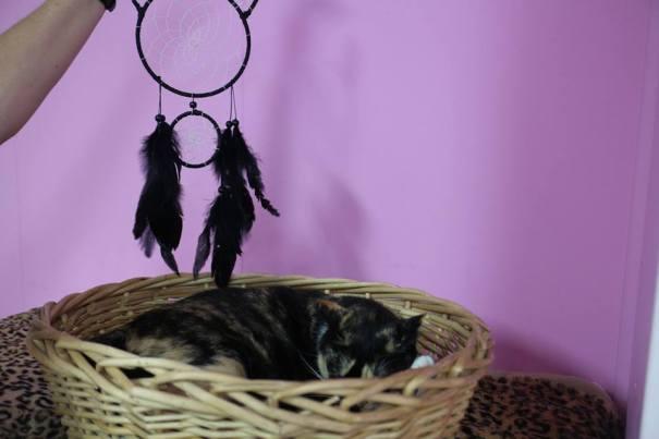 Maple Dream Cat-che
