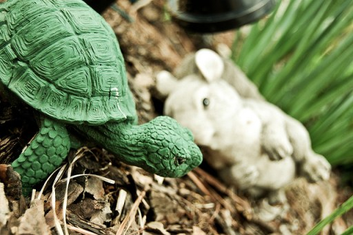 tortoise > the hare.