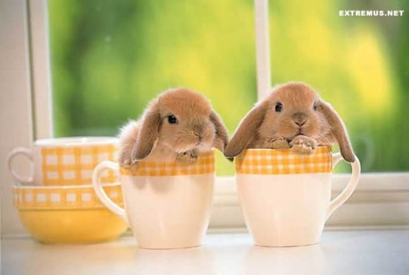 two bunnies in cups