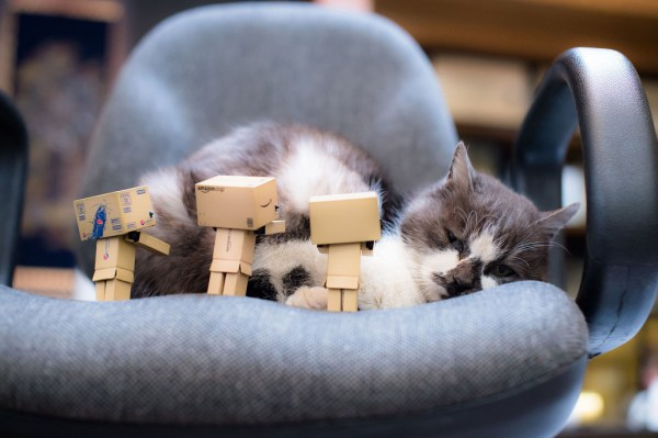 Danbo negotiation team has failed the mission