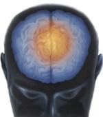 Mappe e cervello