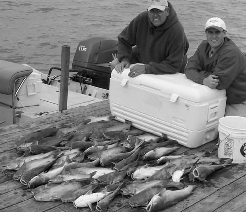 Splat Fishing Catfish