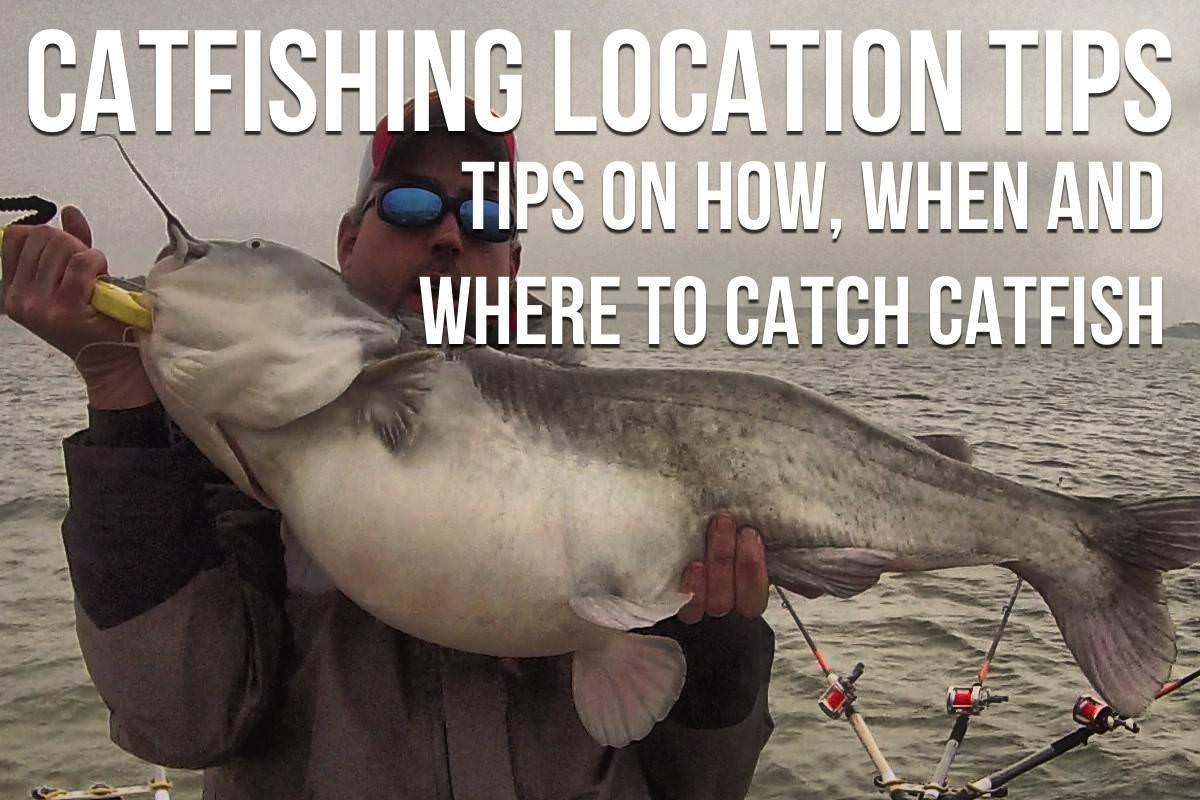 55443af778 Catfishing Tips  The Ultimate List Of Catfishing Tips