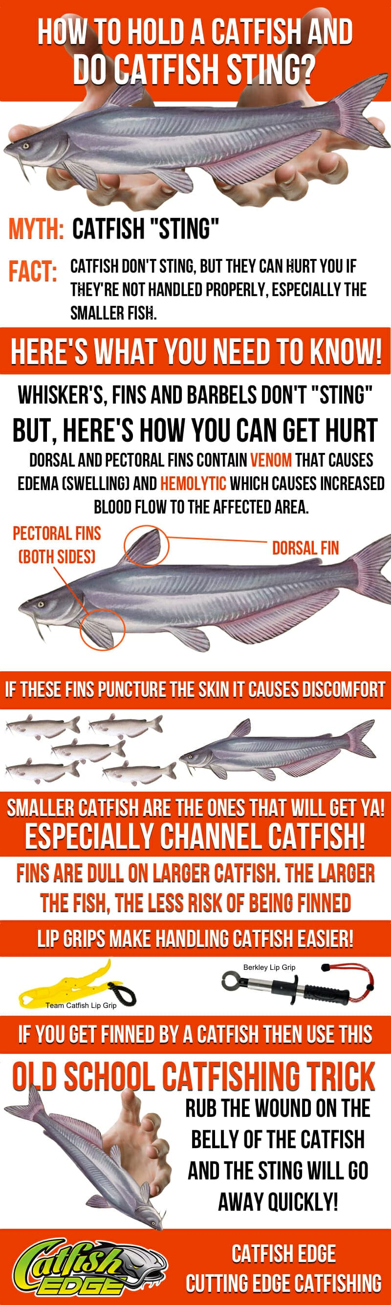 How To Hold a Catfish Anatomy