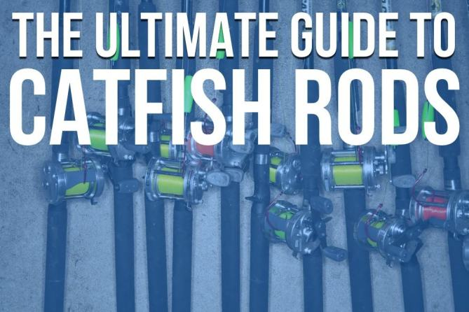 Ultimate Guide Catfish Rods