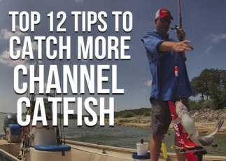 Top 12 Channel Catfish Tips