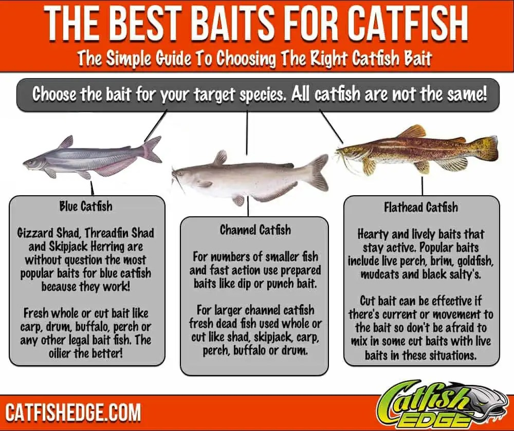 Best Catfish Bait Made Simple